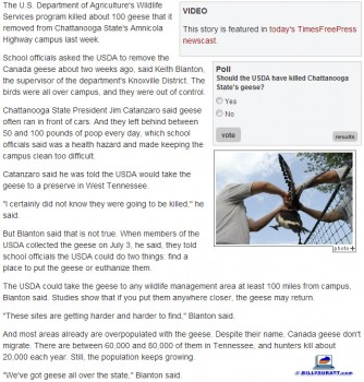 July 15, 2013 screen capture of a July 11 Chattanooga Times Free-Press story on the Canada goose controvery at Chattanooga State Community College. (Click image to enlarge.)